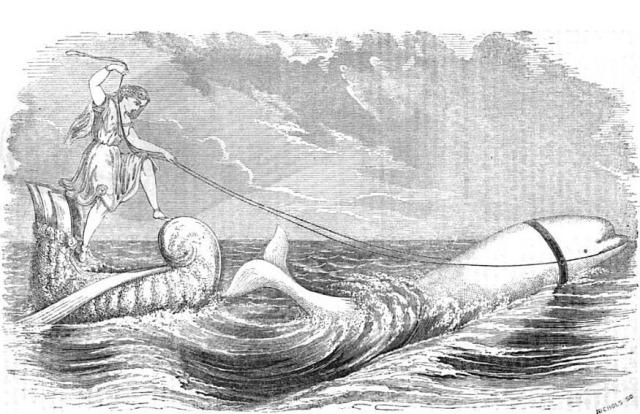 beluga-chariot-090412
