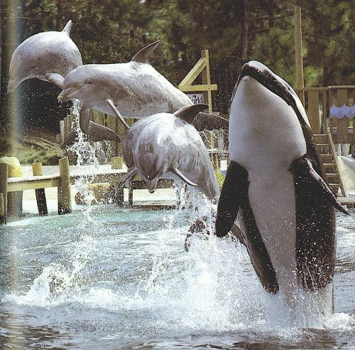 Kotar at Sea World of Florida's Whale and Dolphin stadium