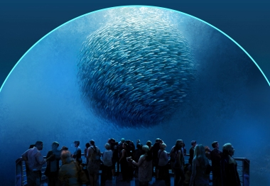 7_National_Geographic_Encounter_BaitBall